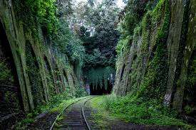 free images tree nature forest track railway railroad