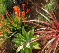 Drought Tolerant Backyard Ideas Drought Tolerant Garden Ideas Landscape Eclectic With Perennial