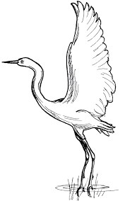 crane bird coloring pictures for kids print 9