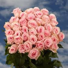 12 best mother u0027s day roses images on pinterest fresh flowers
