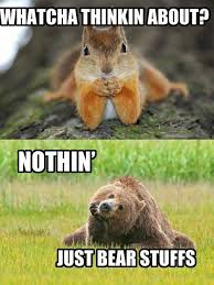 Meme Animals - animals meme funny pictures quotes memes funny images funny