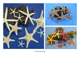 wholesale starfish for sale for crafts and decor discounts