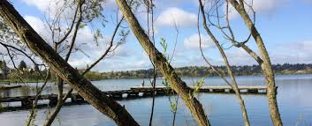 Map Of Greenlake Seattle by Seattle Greenlaker Green Lake U0027s Elusive Carp News Culture And