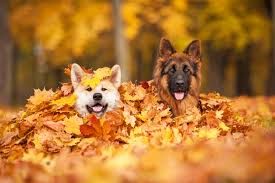 5 cool fall activities for you and your dog familypet