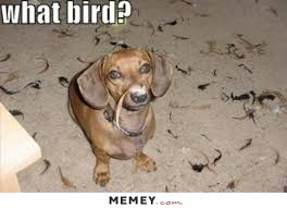 Dachshund Meme - i saw a dachshund meme today and it made me stop and laugh out