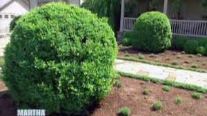 video learn to landscape your home with boxwood shrubs martha