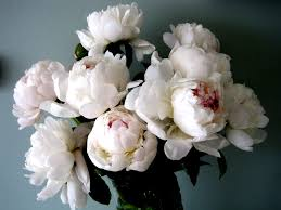 peonies flower peonies the of flowers flirty fleurs the florist
