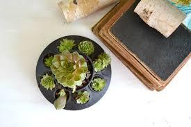 diy succulents planter diy in 30 my creative days