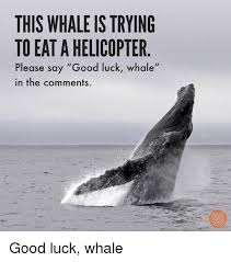 Whaling Meme - this whaleis trying to eat a helicopter please say good luck whale
