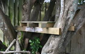 build a treehouse with school projects