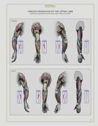 Human Anatomy Textbook Pdf Anatomy Next Store Pdf Ebook Download For Artists Art Books