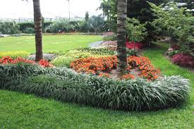 create a carpet of color in your yard with groundcovers costa farms