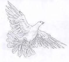 white dove pencil sketch stock illustration image of symbol