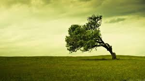 tree wallpapers best wallpapers
