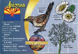 arizona native plants flowers trees native plants remembering letters and postcards