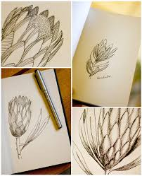 the 158 best images about proteas on pinterest