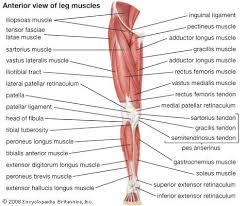Human Anatomy Muscle 220 Best Anatomy For Massage Therapists Images On Pinterest