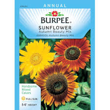 sunflower seed packets stover sunflower combination pack 83023 6 the home depot