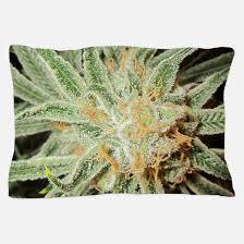 Betty Boop Duvet Set Marijuana Bedding Marijuana Duvet Covers Pillow Cases U0026 More