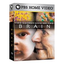 the secret life of the american teenager episode guide the secret life of the brain 3pk dvd shop pbs org