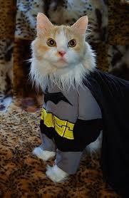 Cat Suit Meme - the 57 greatest pet costumes ever pets pinterest pet