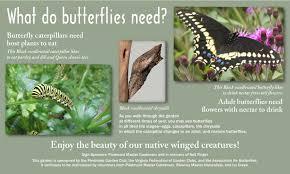 native plants for butterflies ivy creek butterfly garden association for butterflies