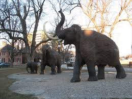 woolly mammoth mammuthus primigenius ottawa ontario