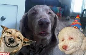 Stoned Dog Meme - meme watch 10 dog is the newest addition to the stoner dog pantheon