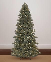 majestic blue spruce tree tree classics