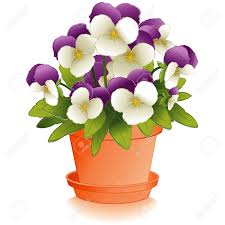 johnny jump up flowers pansies in clay flowerpot royalty free