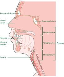 Roof Of Mouth Cancer Images by Know Your Cancers U2013 20 20 Voice Cancer