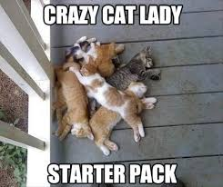 Funny Cat Lady Memes - crazy cat lady funny meme photo