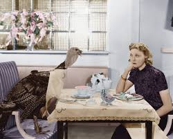 funny images of turkeys in thanksgiving women hanging out with turkeys a thanksgiving tradition for the