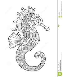 sea horse coloring book for adults stock illustration image
