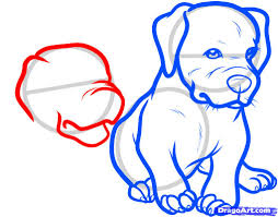 how to draw two puppies of a pit bull terrier with a pencil step