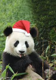 christmas panda images reverse search