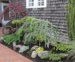 decorative blue spruce trees for landscaping houses