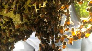 How To Get Rid Of A Beehive In Your Backyard Beekeeping 101 How To Start A Beehive Backyardhive