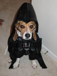 foap com darth vadar beagle beagle wearing star wars costume