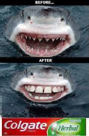 Toothpaste Meme - shark toothpaste memes