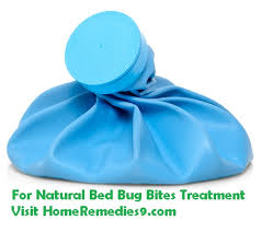 Bed Bug Home Remedies How To Get Rid Of Bed Bug Bites Bed Bug Bites Remedies