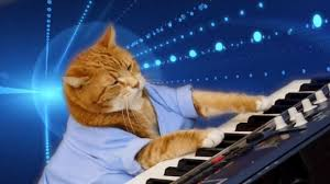 Cat Playing Piano Meme - keyboard cat a beloved internet sensation has died at age 8