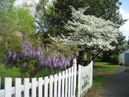 picket fence front yard ideas 7743