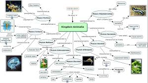 Map Of Animal Kingdom You Won U0027t Panic About Learning Animal Kingdom After Reading This