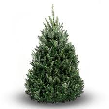 balsam fir christmas tree balsam fir christmas tree evergreen delivery boston christmas