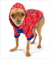 Boy Dog Halloween Costumes Spiderdog Dog Costume U2013