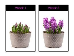 low light flowers amazon com hoont led grow light indoor plant flowers and