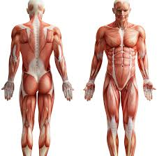 The Human Body Picture 12 Amazing Things We Learned About The Human Body In 2015