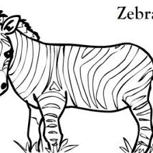 zebra face coloring kids drawing coloring pages marisa
