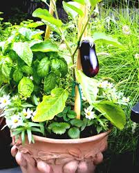 kitchen gardening ideas design kitchen garden ideas tips in pakistan india pictures urdu